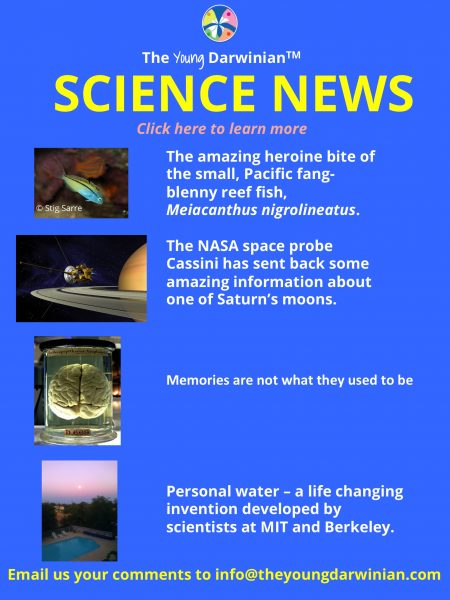 Science news from The New York Times. Get the latest developments about space, the environment, animal behavior, the brain, genetics, archeology and robots along with the weekly Science Times.